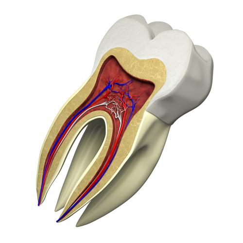 Root Canal Endodontics
